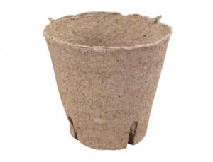 Kvetník rašelinový d8cm-zárez