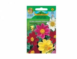 Jiřinka záhradné jednoduchá Mix 70 semien