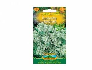 Mliečnikovka Moutain Snow 20 semien