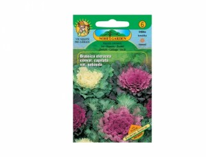 Kapusta okrasná Flower annual 50 semen