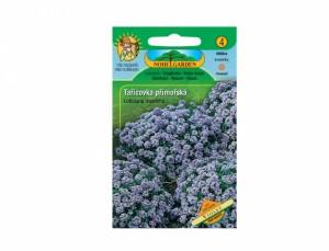 Tařicovka přímořská Violet 350 semen