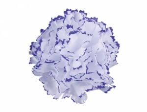 Karafiát 9cm bílo-fialový