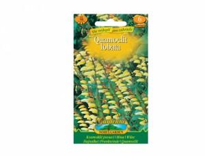Kvamoklit pnoucí 10 semen