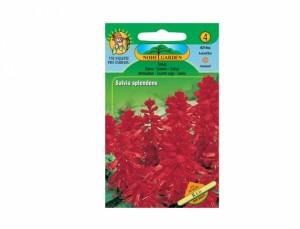 Šalvěj Red Annual flowers