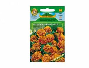 Aksamitník rozkladitý nízký Orange - Brown  60 semen