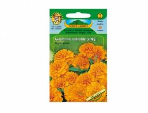 Aksamitník rozkladitý nízký Orange  60 semen