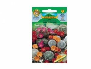 Kaktusy Mix
