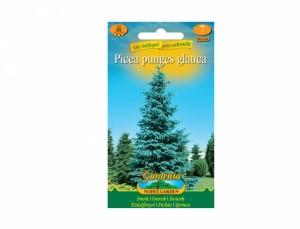 Picea glauca - Smrk pichlavý