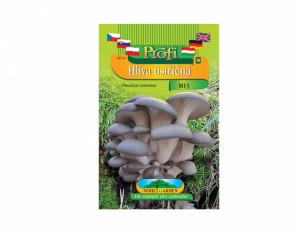 Pleurotus ost- hlíva ústricová