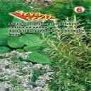 Zmes jednoročných aromatických rastlín - na záhon - rastlina byliniek 2g